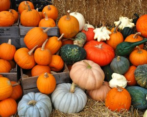 pumpkins_gords_02