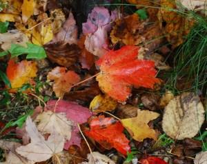 fall_leaves_02