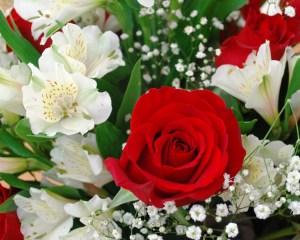 valentine_roses_03