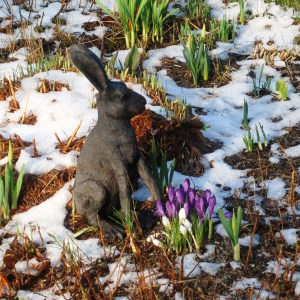 bunny_in_snow_w_croci