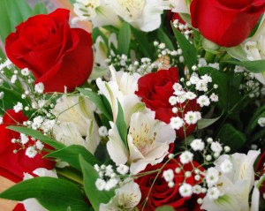 roses_02
