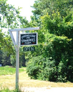 NYE_ASLPT_Springledge_Farm_Strawberry_Fields