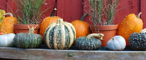 gnarly_gourds