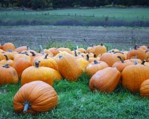 nye_pumpkins